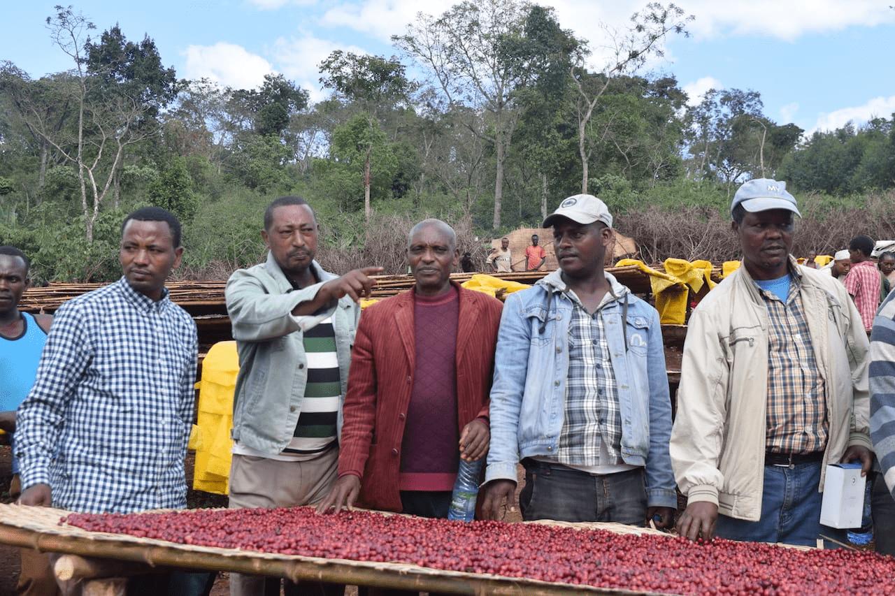 caficultores de cafe de etiopia