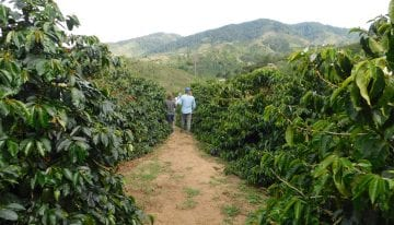 How Colombian Coffee Producers Are Experimenting With Processing