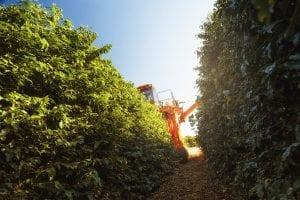 cafe cosechado mecanicamente