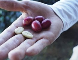 How Origin Affects Coffee Chemistry & The Impact On Traceability