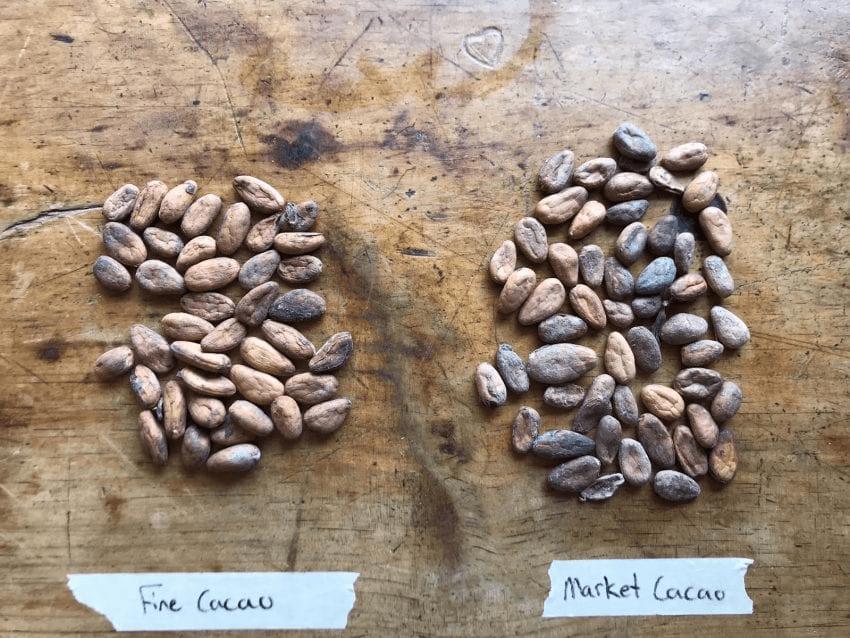 muestras de granos de cacao