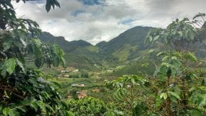coffee farm views