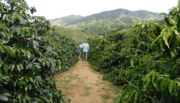 Cómo Los Caficultores Colombianos Experimentan Con Los Procesos