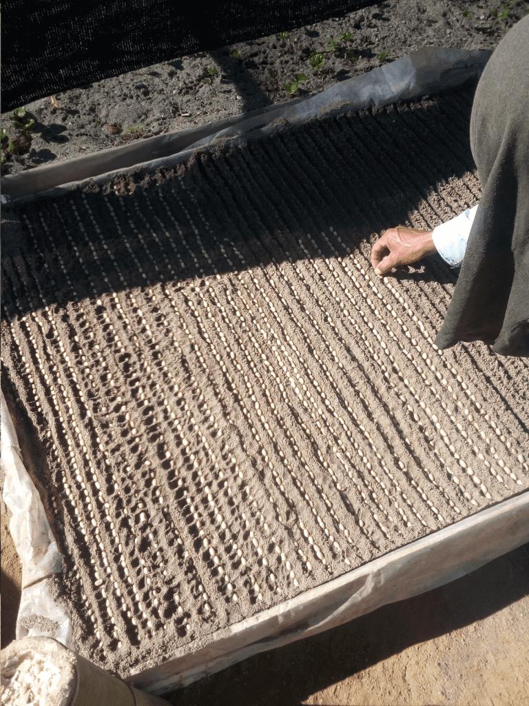 semillas de cafe siendo plantadas por un productor