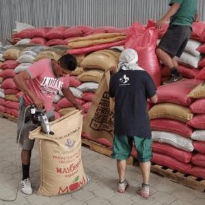 empacando sacos de café en bodega