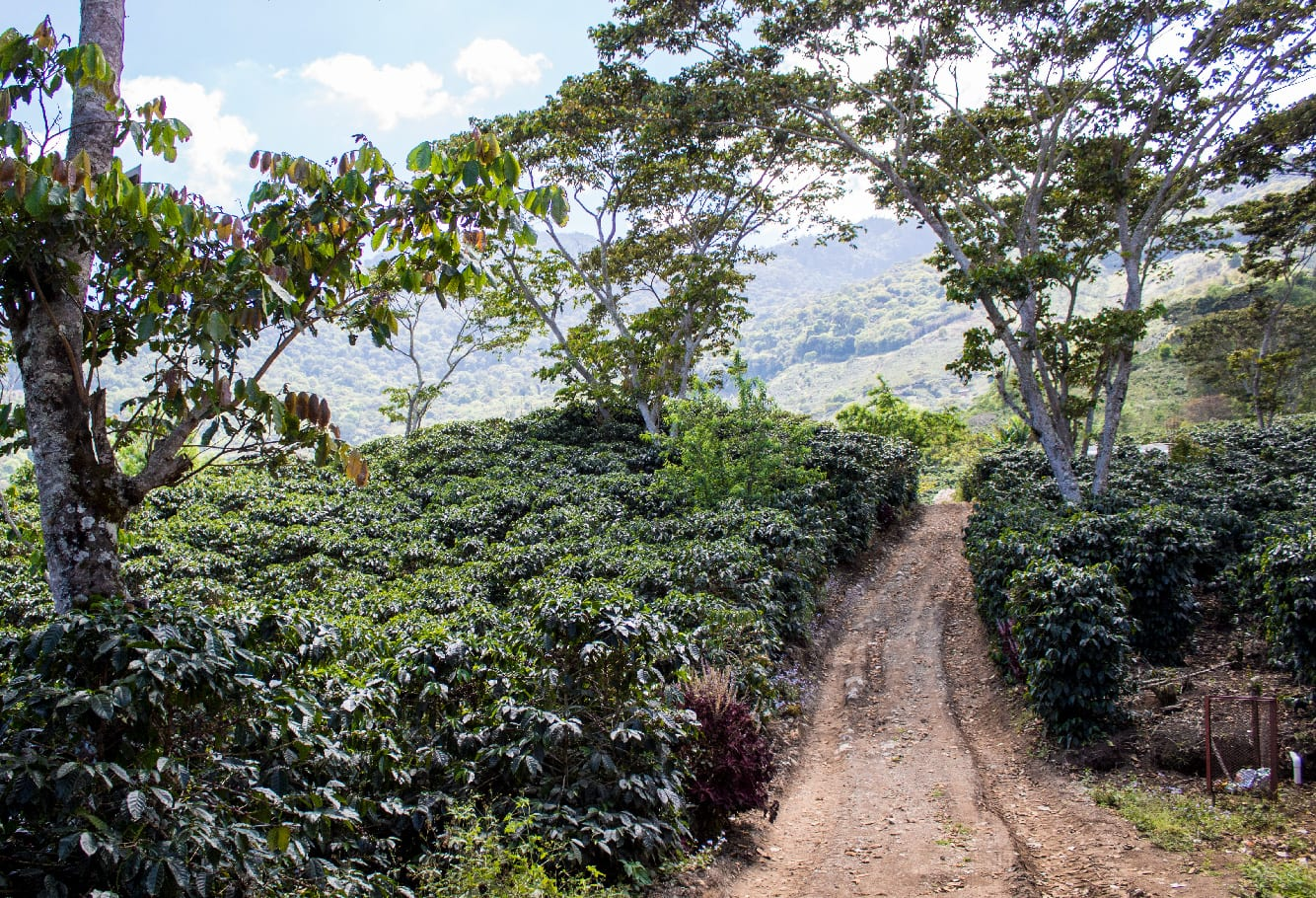 Tips to Create a Business Plan For Your Coffee Farm