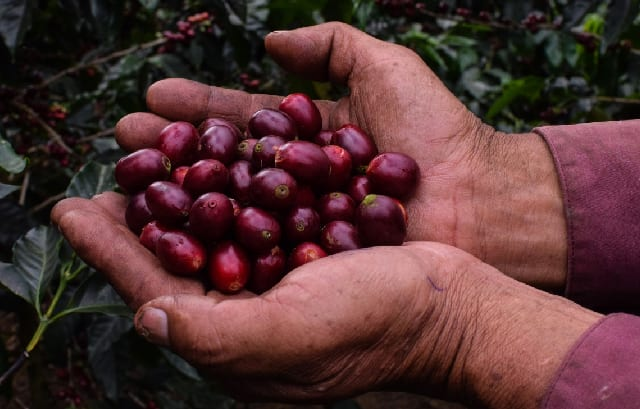 Coffee Farm Management: How to Determine Your Production Cost
