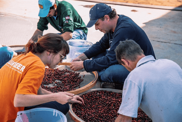 How Does Processing Method Impact Coffee Chemistry & Flavor?