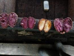 What Happens During Cacao Fermentation?