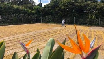 ¿Qué Sucede Durante la Fermentación Del Cacao?