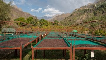 Tracing Coffee's Roots Back to Al-Mokha, Yemen