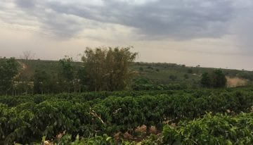 Will Brazil's Sudden Frost Increase Global Coffee Prices?
