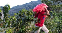 How Nicaragua's Political Climate Is Impacting Its Coffee Industry