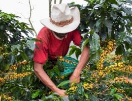 How Coffee Producers Can Prepare For Unexpected Weather