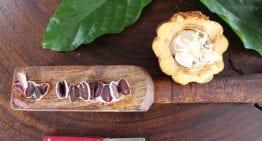 ¿Qué es la Prueba de Corte Del Cacao y Cuándo Puede Ser Útil?