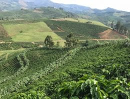 The Pros & Cons of Growing Organic Coffee