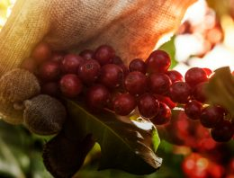 Can Coffee Quality & Environmental Sustainability Go Hand in Hand?
