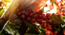 Café de Calidad y Sostenibilidad Ambiental: ¿Cómo Lograrlos?
