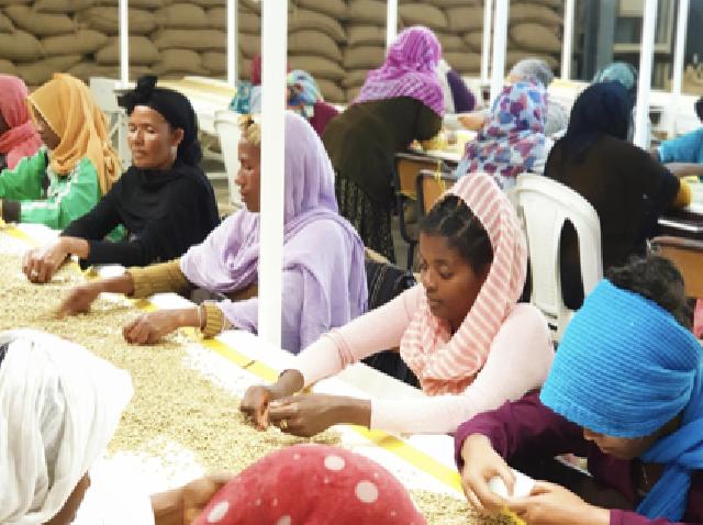 Yirgacheffe耶加雪菲,Sidamo西达摩等:《埃塞俄比亚咖啡指南》-咖报