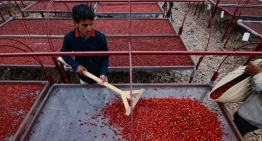 Pricing Coffee: Why Do Yemeni Beans Cost More?