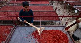 Precio Del Café: ¿Por Qué Los Granos de Yemen Cuestan Más?