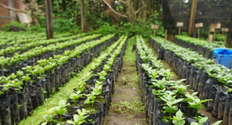Should The Coffee Industry Use Buffer Stocks?
