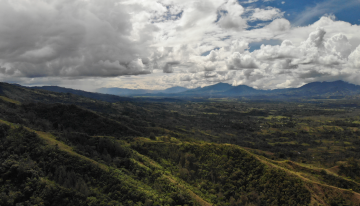 How Coffee Producers Can Benefit From Data
