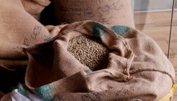 How Packaging Material Impacts Green Coffee Quality Over Time