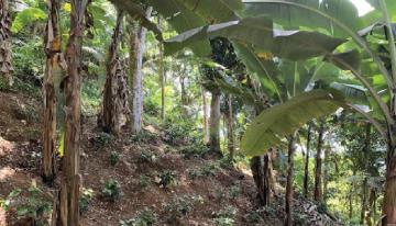 Los Beneficios y Retos de la Agroforestería Para la Caficultura