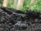 Aguas Mieles: de Contaminante a Fertilizante Orgánico